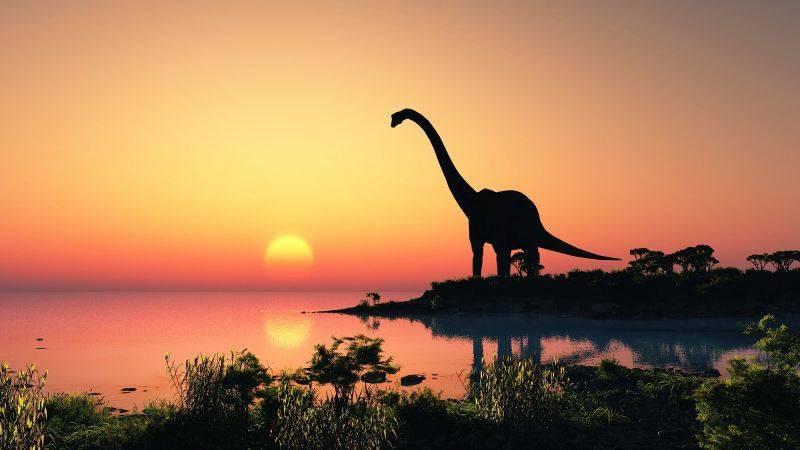 brontosauro coda lunga long tail keywords e lead generation